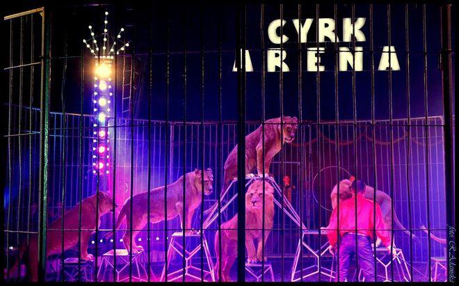 cyrk_arena1