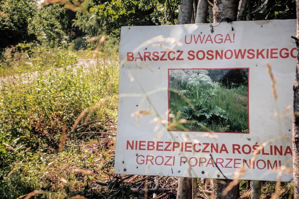 barszcz (5)